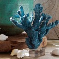 Glass Based Coral Stands