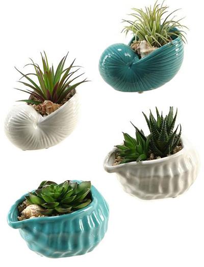 Shells with Succulents Set