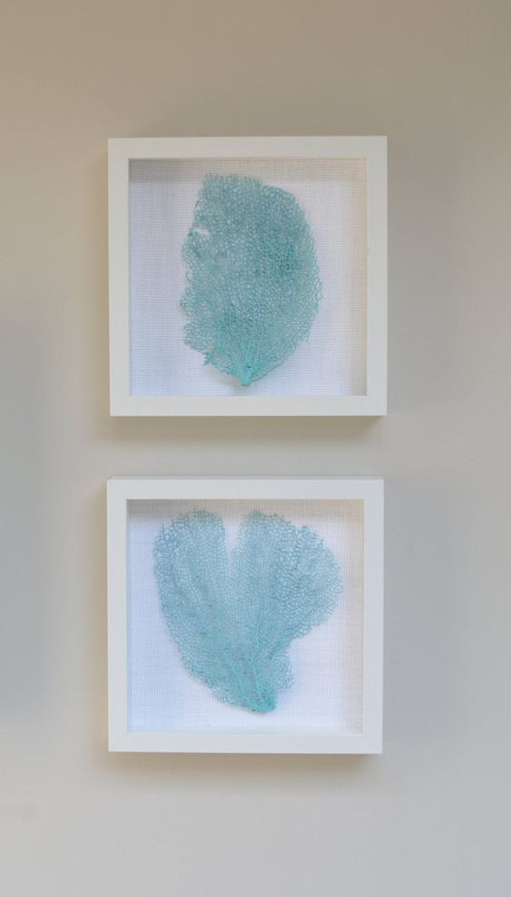 Caribbean Blue Genuine Sea Fan Shadow Boxes